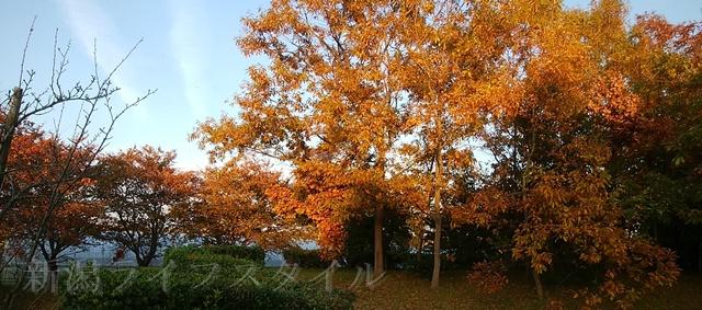 舞平公園の紅葉した木々その3