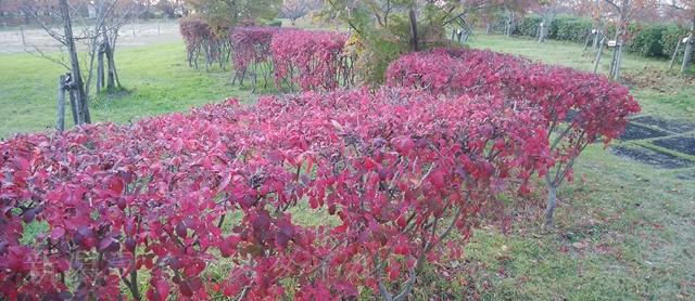 舞平公園の紅葉した木々その4