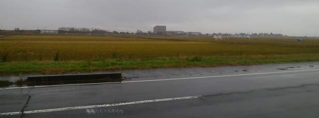 源松食堂の向かいの田んぼ