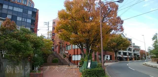 どっぺり坂と、その前にある紅葉した大きな木