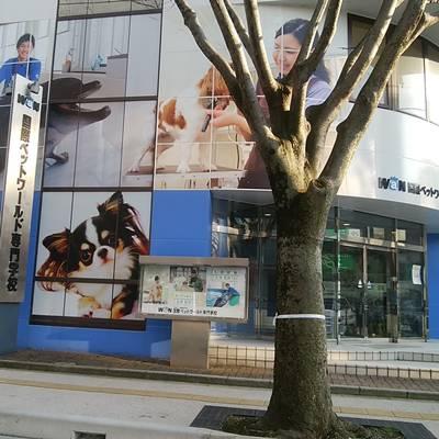 国際ペットワールド専門学校の入口付近と街路樹