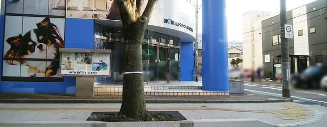 けやき通りからANEC Niigataの駐車場へ向かう道