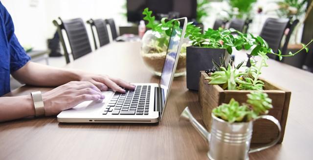 部屋のテーブルの上でノートパソコンをカタカタ打つ男性の腕。卓上には観葉植物が。