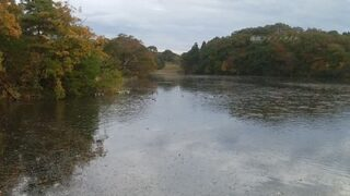 仁箇堤の湖のアップ