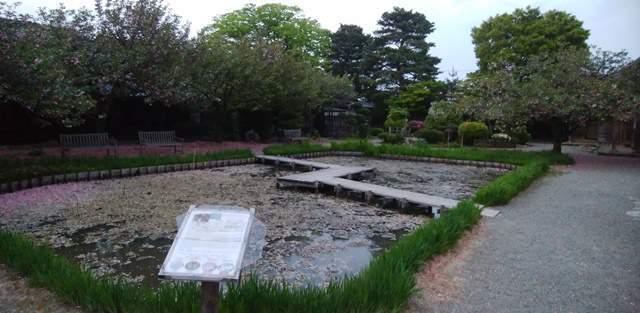 北方文化博物館の古代蓮の池