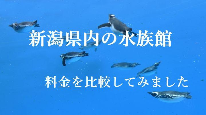 6匹のペンギンが水槽を泳いでいる